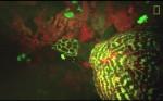 Nieznany dotąd gatunek świecącego żółwia odkryty na południowym Pacyfiku