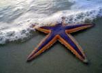 Rozgwiazdy i karpie …jak uratować czyjeś życie