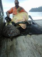 Mężczyzna kupuje żółwie na rynku z żywnością, aby przywrócić im wolność