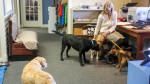Kurgo – firma, która pozwala pracownikom zabierać psy do biura