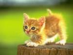 Mruczenie kota daje niesamowite korzyści zdrowotne