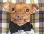 Tuńczyk –  najbardziej uroczy pies na świecie :)