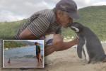Dindim – pingwin, który przepływa co roku 5 000 mil, żeby odwiedzić mężczyznę, który ocalił go przed śmiercią