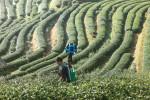 Mężczyzna pokonał pieszo ponad 500 km, aby udokumentować piękno Tajlandii w trudno dostępnych miejscach