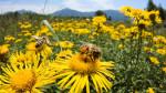 Zgromadzenie Narodowe we Francji głosuje, by całkowicie zakazać pestycydów zabójczych dla pszczół