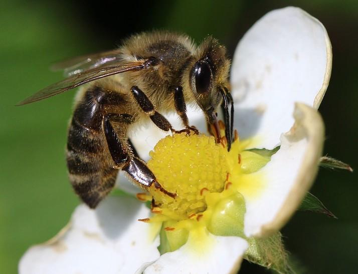 Pszczoły zamieszkają w centrum Lublina - Dobre Wiadomości