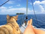 Kobieta odeszła z pracy i żegluje po całym świecie z kotką, którą uratowała przed utonięciem