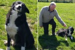Pies przemierzył prawie 400 kilometrów, żeby wrócić do domu