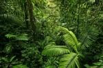 Norwegia stała się pierwszym krajem na świecie, który wprowadził politykę zerowego wylesienia