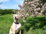 Gdy zaginał ich ukochany pies, mieli 23 dni aby go odnaleźć, gdyż cierpiał na śmiertelną chorobę