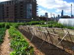 Każdy może mieć własną miejską farmę