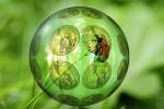 Ekologiczne rolnictwo mogłoby rozwiązać problem głodu na świecie