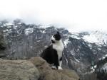 Kot-przewodnik poprowadził zagubionego turystę do schroniska