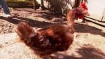 """Zaginiona kura odnalazła się po 9 miesiącach, nieco wyliniała, ale żywa, """"to cud"""" – mówi właściciel"""