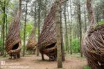 Leśne kokony – niesamowity projekt dla natury