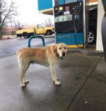 Chciał pomóc zbłąkanemu psu, ale ratunek nie był konieczny