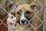 Radomskie przytulisko kupi nowe budy ze sprzedaży psich kalendarzy