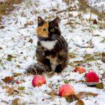 Przepiękna kotka o dwóch twarzach podbiła serca tysięcy internautów