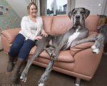 Freddy – największy pies na świecie