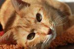 Co dzieje się z twoim ciałem, kiedy leży na tobie kot i mruczy…