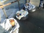 Pracownicy dworca autobusowego pomogli zmarzniętym szczeniakom