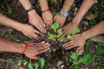 """Każdy może posadzić drzewo przez Internet, w ramach programu """"Po stronie natury"""", by zadbać o zasoby wody dla potomnych"""