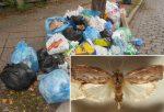 Larwy ćmy pomogą oczyścić ziemię ze śmieci, okazuje się że trawią folię wykonaną z polietylenu