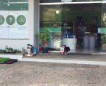 Każdego dnia ten pies sam robi dla siebie zakupy i wraca do domu z paczką pełną jedzenia