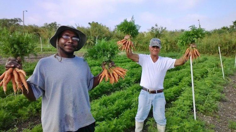 Bezdomni odnaleźli nowe życie, pracując na 9-hektarowej ekologicznej farmie i restauracji