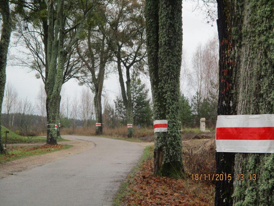Odblaski zamiast wycinki – drogowcy i ekolodzy wspólnie zadbają o drzewa