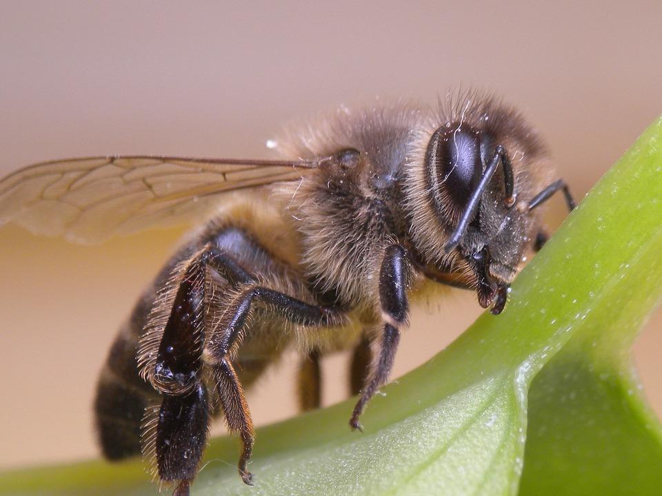 Pszczoły coraz bardziej popularne we Włoszech. Ule wyrastają na balkonach, dachach i w ogrodach