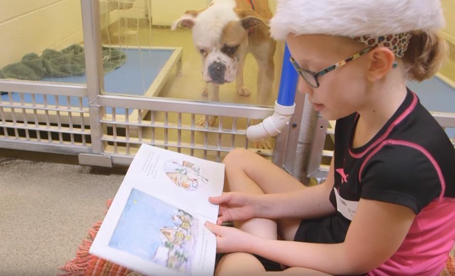 Dzieci czytają książki bezdomnym psom