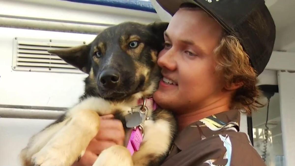 Zaginiony pies, który wypadł z łodzi, odnalazł się po pięciu tygodniach