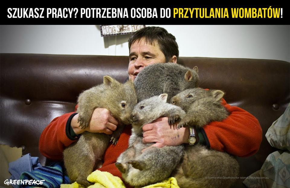 """Praca marzeń – zostań """"przytulaczem"""" wombatów :)"""