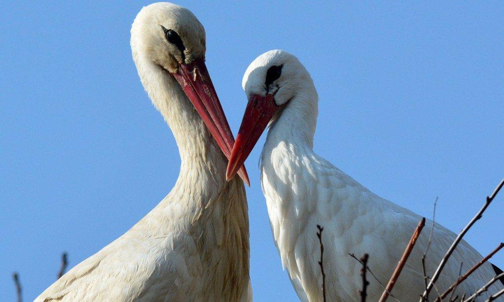 Klepetan i Malena – niezwykła historia miłosna ze świata zwierząt