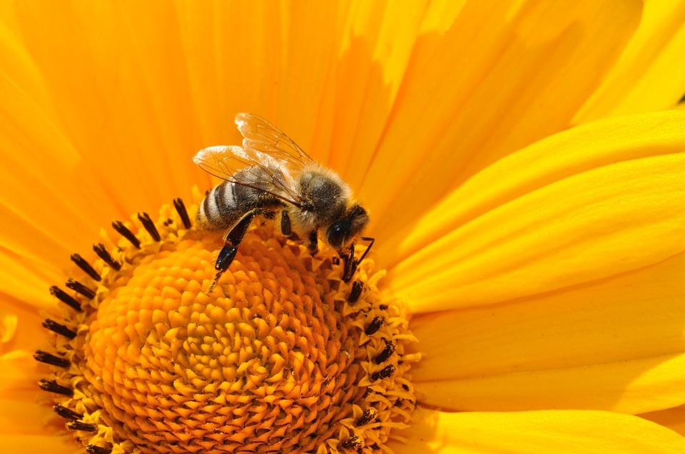 Ule wyrastają na balkonach, dachach i w ogrodach – jednym słowem pszczoły skradły włoskie serca