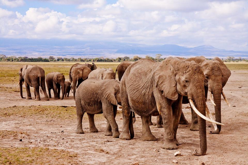 Organizacja Billa Heinecke od lat zbiera fundusze na rzecz ratowania słoni w Tajlandii