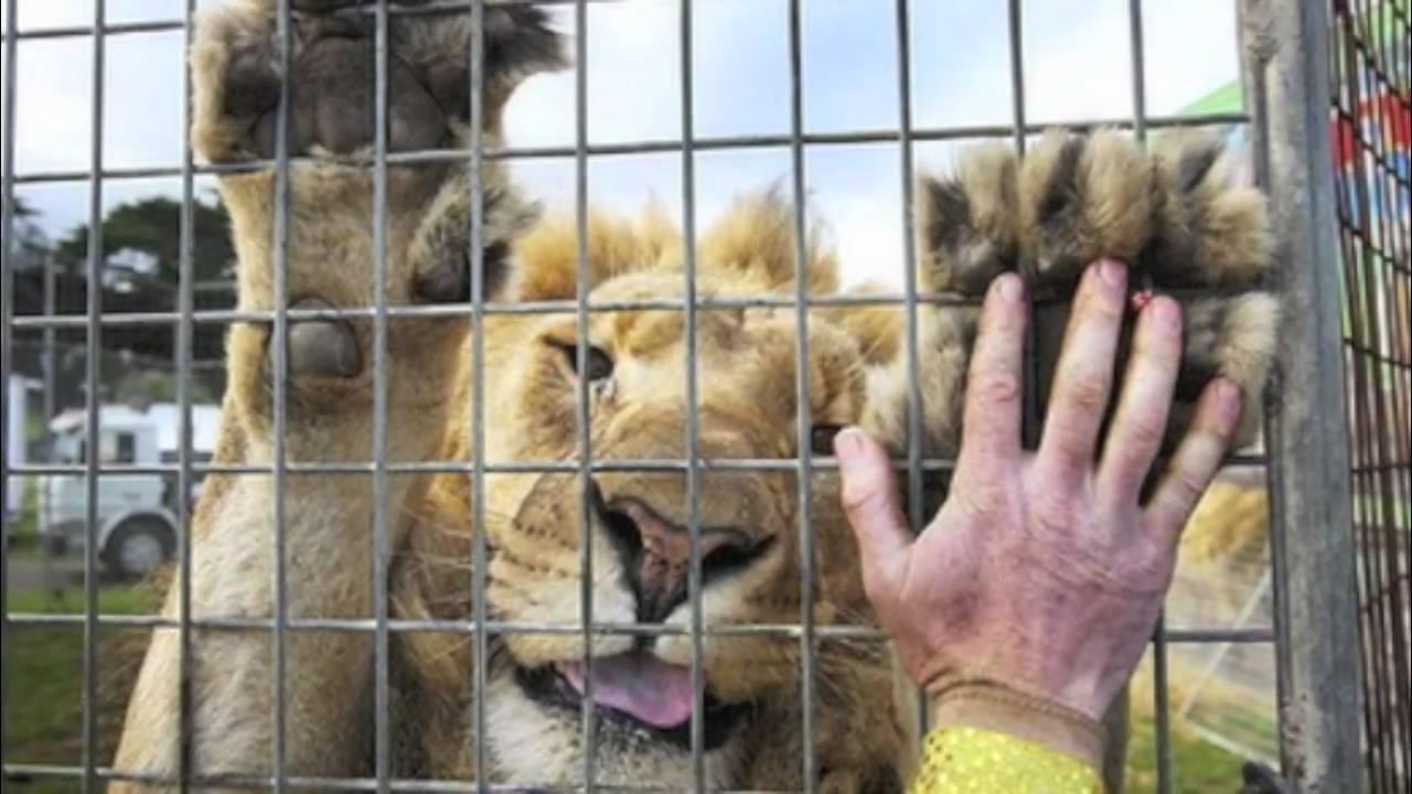 Zwierzęta znikną z cyrków – chcą tego europosłowie