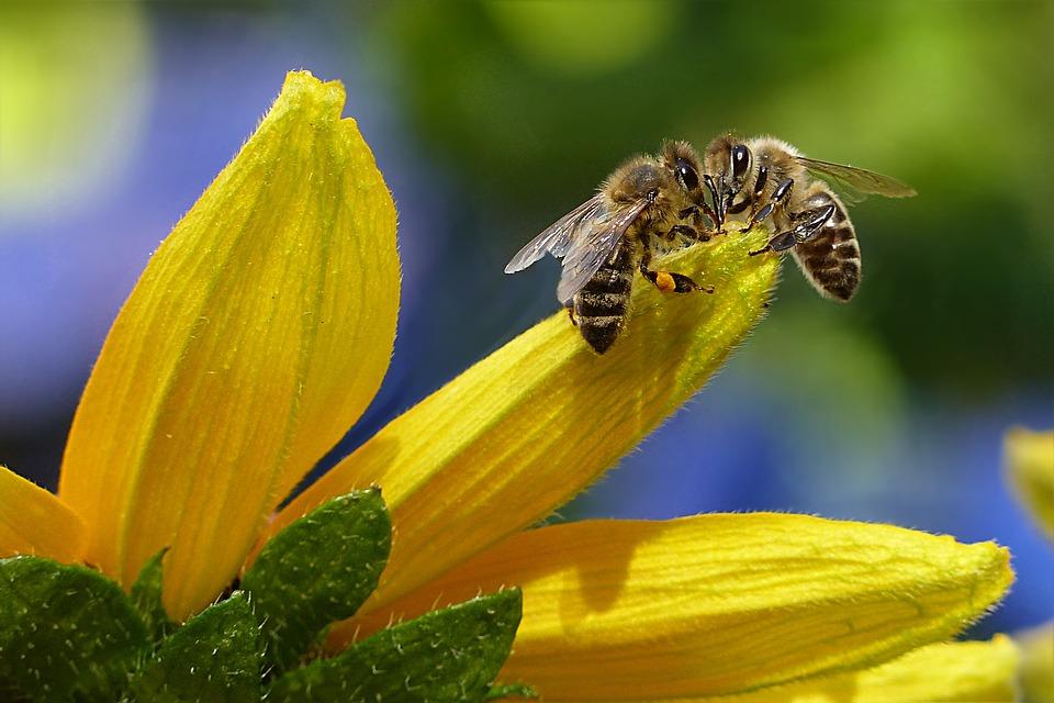 Polacy odkryli lek, który może uratować pszczoły