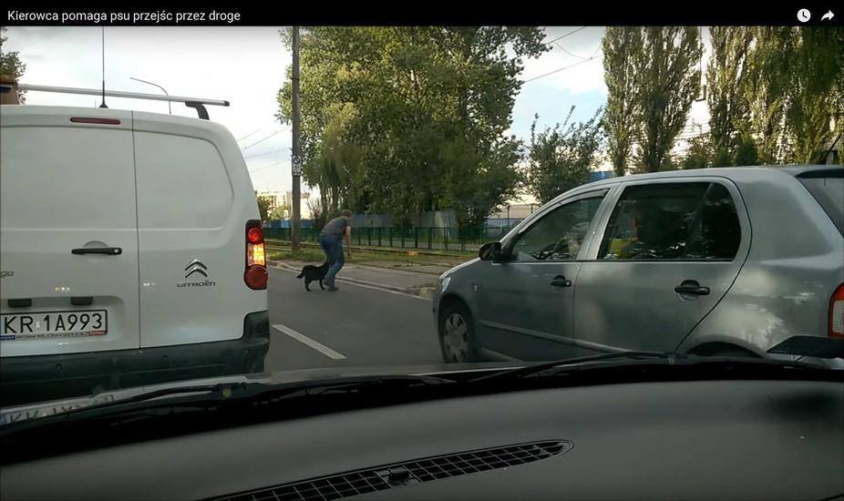 Wzruszający gest kierowcy z Krakowa. Zablokował ruch, żeby uratować psa