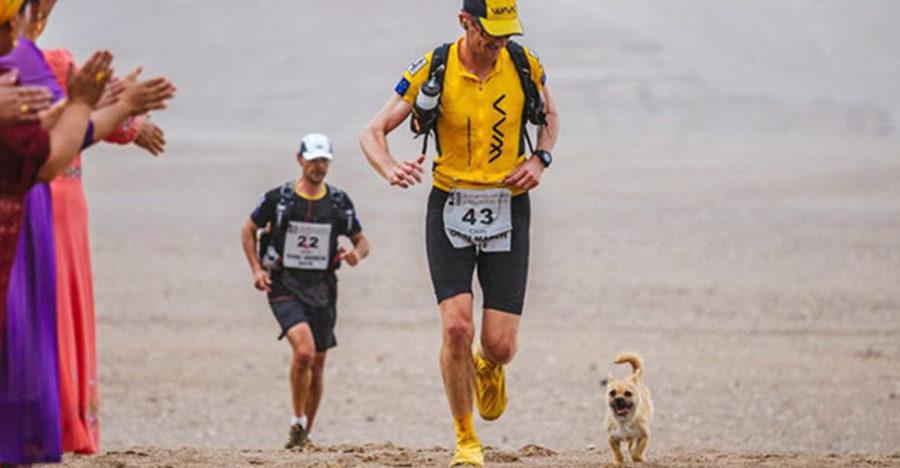 Bezdomna suczka biegła za maratończykiem prawie…170km