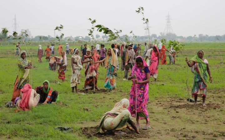 W ciągu 24 godzin posadzą 50 milionów drzew
