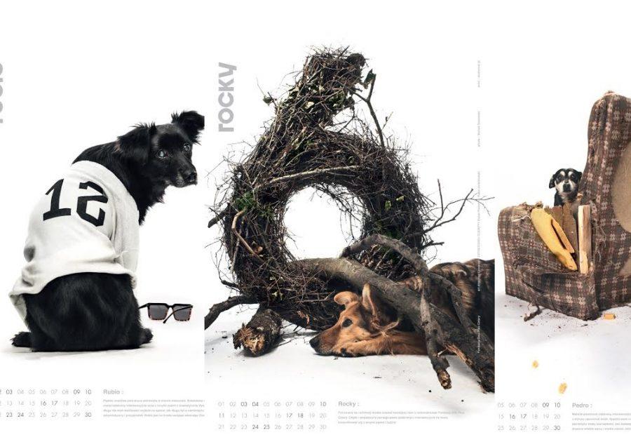 Fundacja wydaje kalendarz z psami szukającymi domu