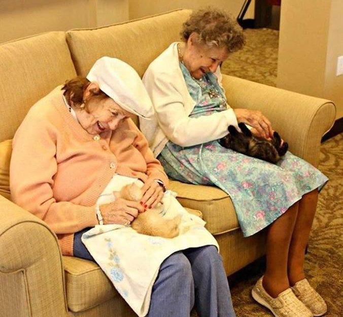 Połączono dom spokojnej starości ze schroniskiem – oto efekty