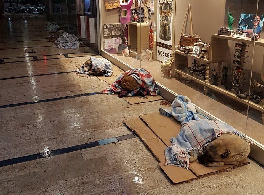 Wpuścili bezdomne psy do galerii handlowej, wszystko po to, żeby mogły przenocować w cieple