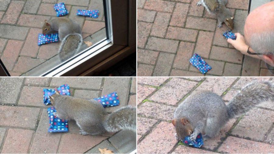 Ojciec obdarował wiewiórki, by uszczęśliwić córkę