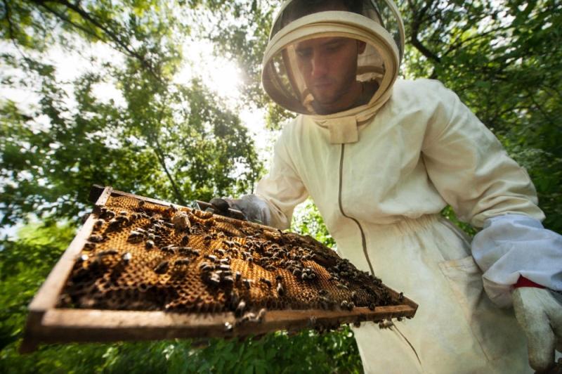 Polacy wymyślili lek, który uratuje pszczoły