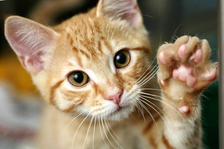 11 naukowych dowodów na to, że kot pomaga w życiu