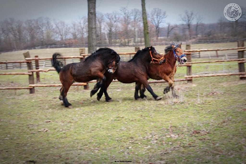 Fundacja Tara wykupiła 34 konie przeznaczone na rzeź
