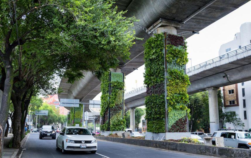 Wertykalne ogrody w Mexico City oczyszczają powietrze